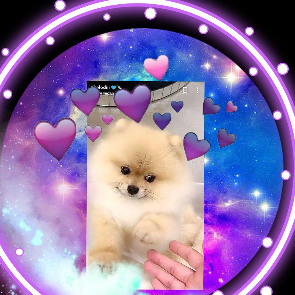 My dog ❤❤❤