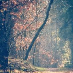 trees woods hazy aesthetic lightcrosseffect freetoedit