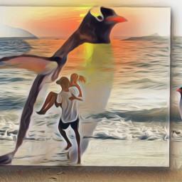 freetoedit ircflippinout pinguin couple beach