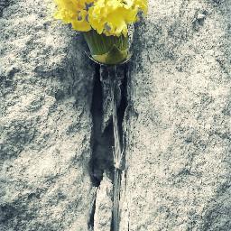 myphotography photography yellowflower a freetoedit