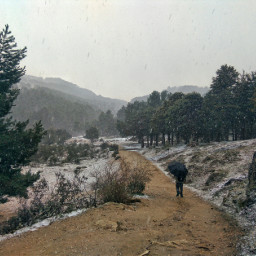 nature snowing hiking hiker coldday