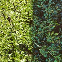 leaf leaflove simplicity nature simple