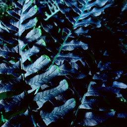 leaf leaflove blue green spring