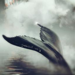 freetoedit fantasy clouds whale pixabay