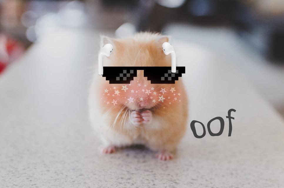 #freetoedit #hamster #oof #airpods #meme #cutie