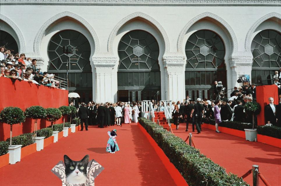 #freetoedit Sansa & Chica  on the red carpet #myedit #creative #cute #catsofpicsart #mypet #cats