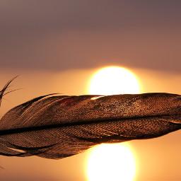freetoedit evening eveningsun feather mood