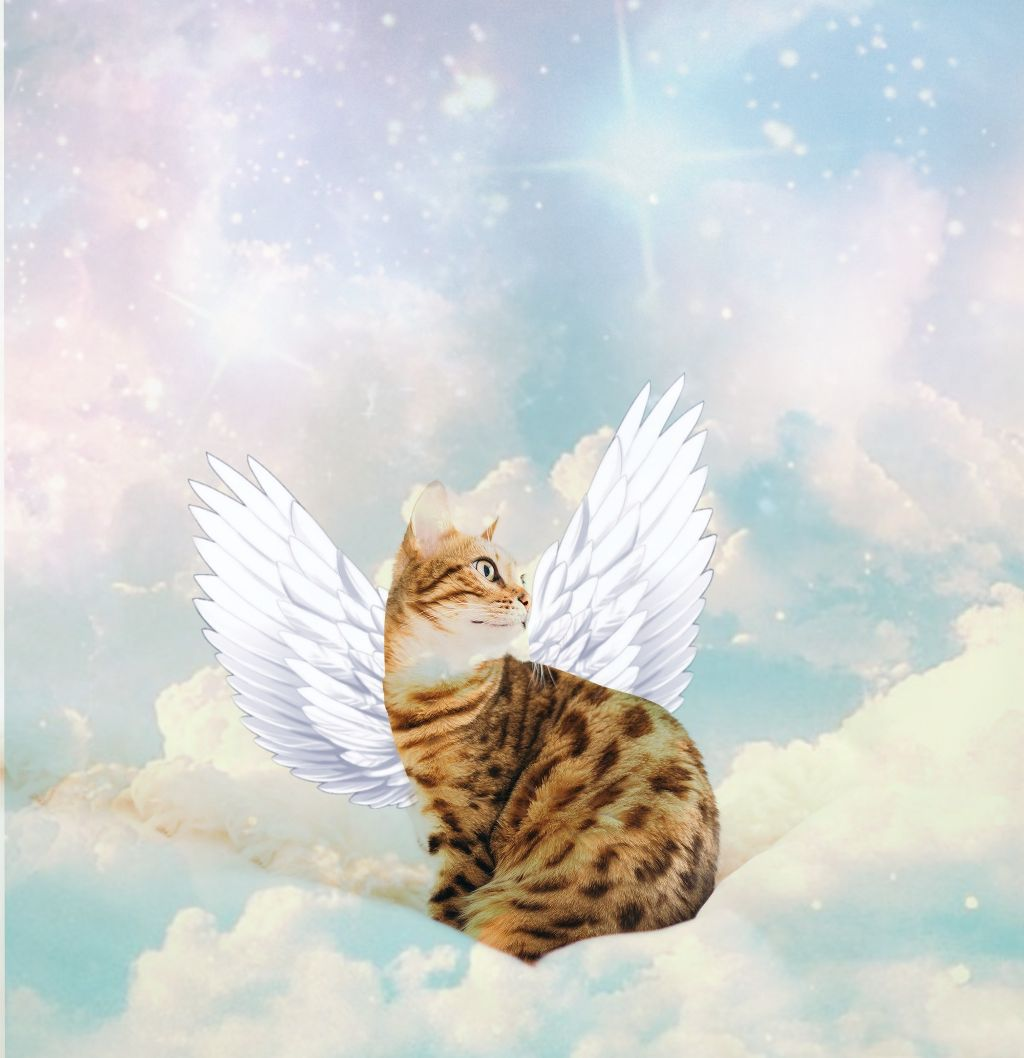 Anime Cat With Wings freetoedit cat beautifulbirthmarks wings galaxy anime