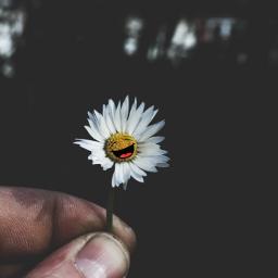 daisy stickers happiness dramaeffect freetoedit