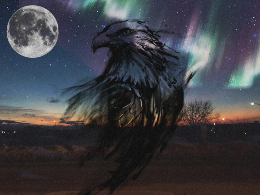 #freetoedit #eagle #night