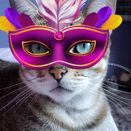freetoedit srccarnavalmask carnavalmask pets cat