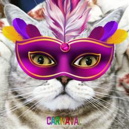 freetoedit carnaval карнавал кот cat srccarnavalmask