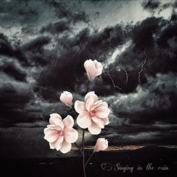 freetoedit vipshoutout rain sky darkclouds