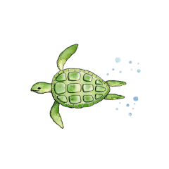 freetoedit overlay watercolor turtle element