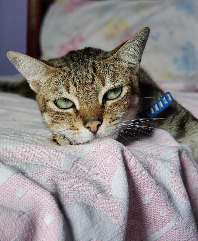 #s9plus #s9+ #samsung #funnypets #cuteanimals #catsofpicsart #catlove #cateyes #cat #cutepets #pet #freetoedit #myphoto #myedit #myphotography #love #greeneyes #green #cute #mood