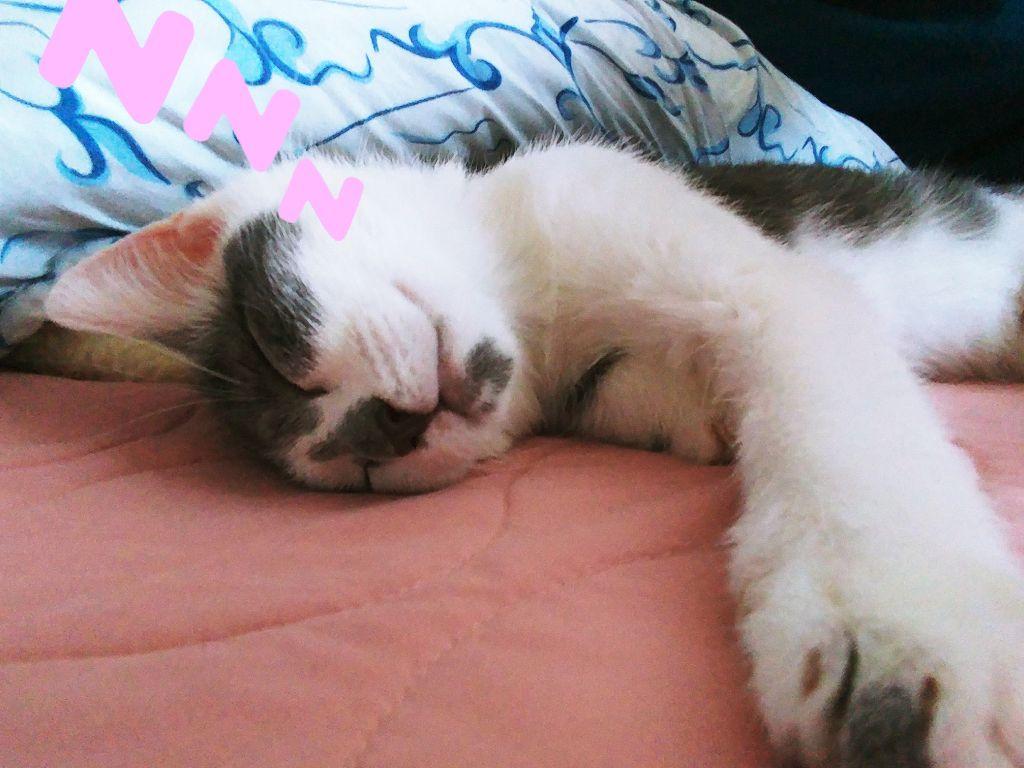 #freetoedit. #kittencuteness. #Cleo #zzzzzzz