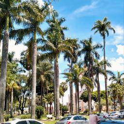 freetoedit urban palmtree cars street