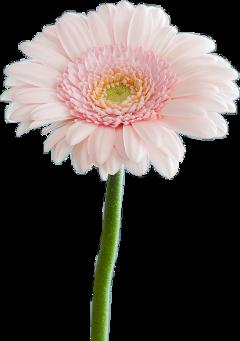 flower flowers carnaval 2019 freetoedit