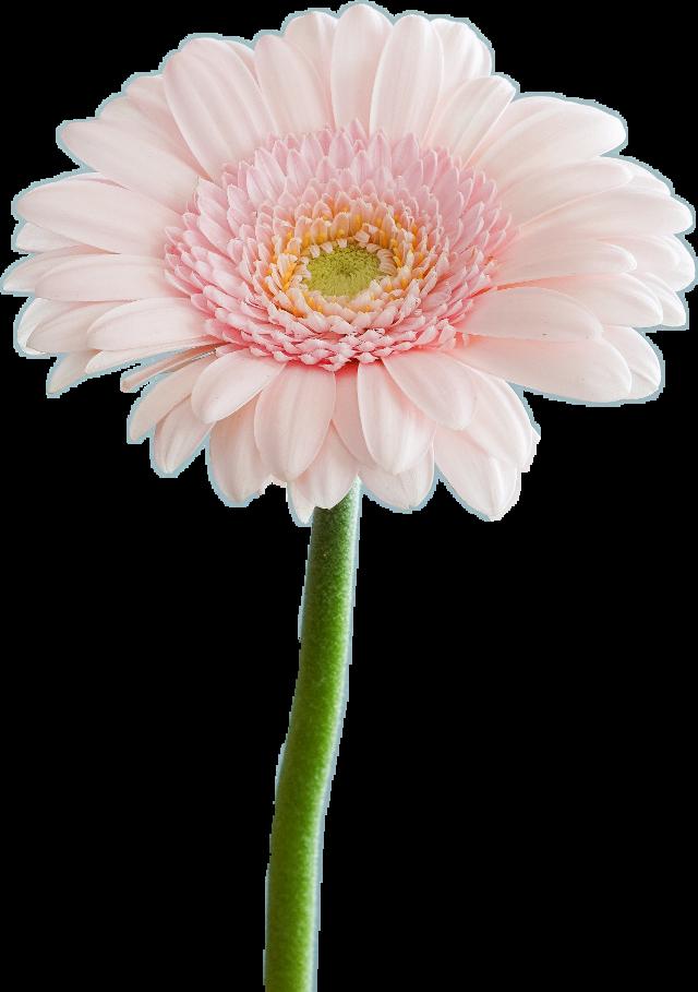 #flower #flowers #carnaval #2019