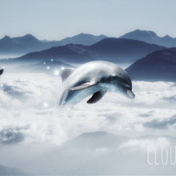 freetoedit dolphins animals sparkles dolphin