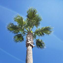 palmtree nature bluesky minimal freetoedit pcdaylight daylight