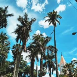 freetoedit palmtree trees bluesky
