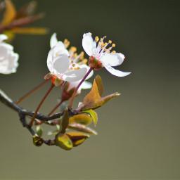 freetoedit photography pcspringishere nature flower