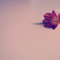 flower photography minimal