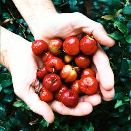 freetoedit nature hands fruit colorful