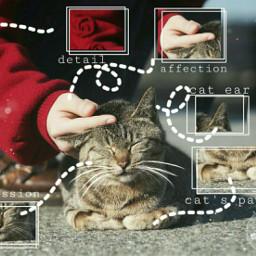 freetoedit myedit madewithpicsart affection cat ecanatomy