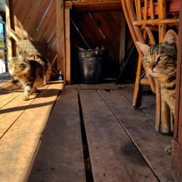 love cats fethiye travel