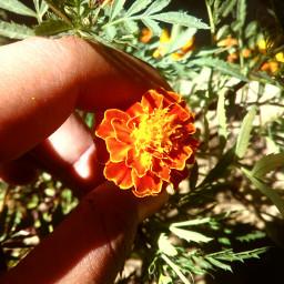 abi natural floral pcflowerinhand flowerinhand