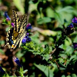 freetoedit pccolorgreen colorgreen butterfly flower
