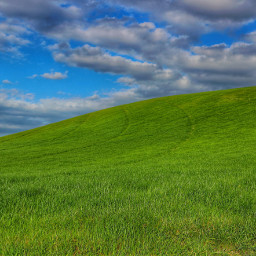 freetoedit fields wheat green sky pccolorgreen