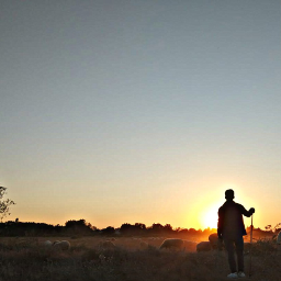 freetoedit sunset shadow shepherd sheep