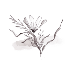 freetoedit overlay flower template element