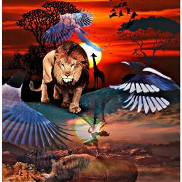 freetoedit africa lion black southafrica