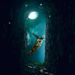 freetoedit doubleexposure lensflare turtle sea