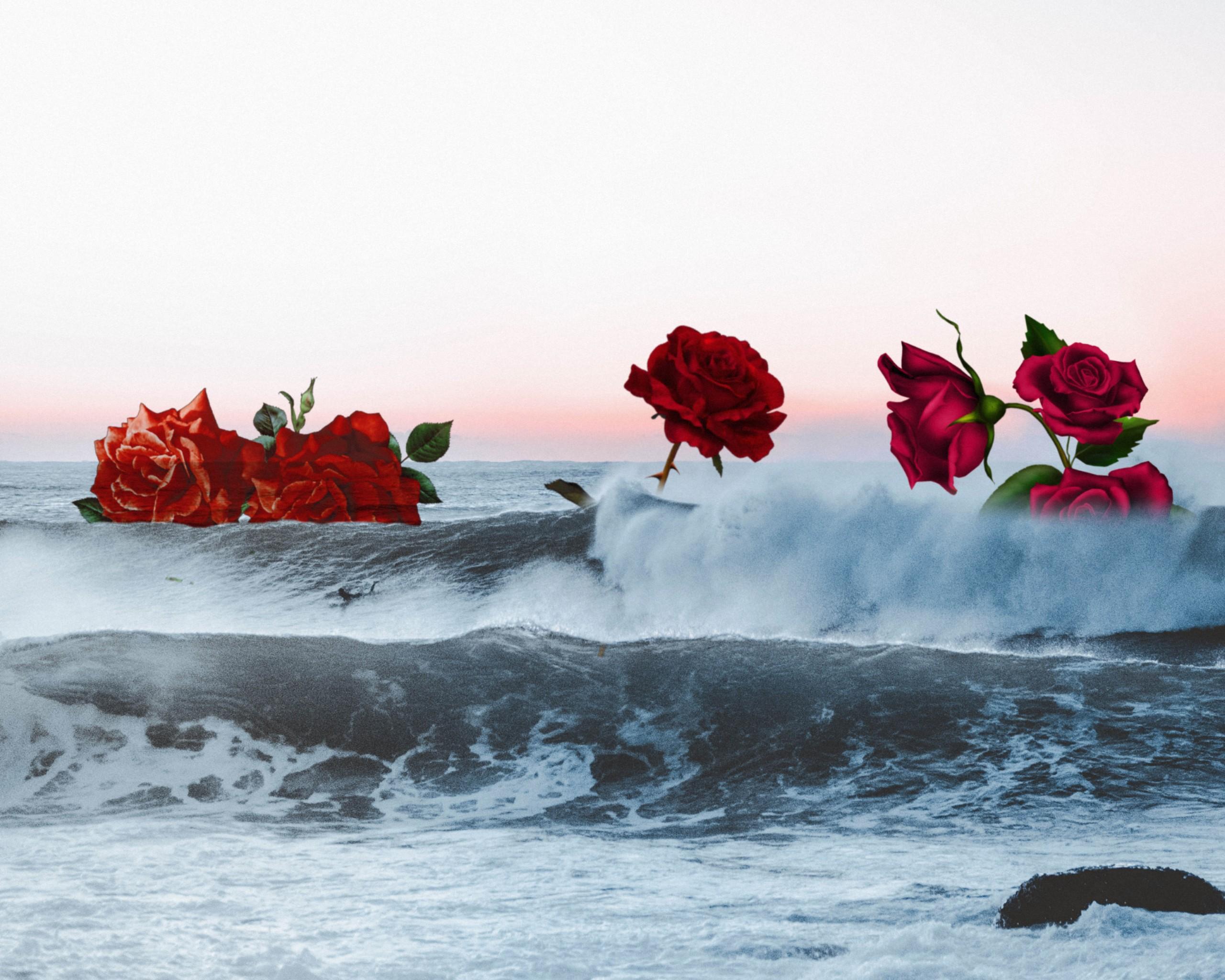 #freetoedit #rose #sea #ocean
