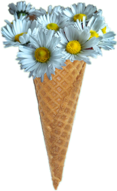 icecreamcone daisies freetoedit cone