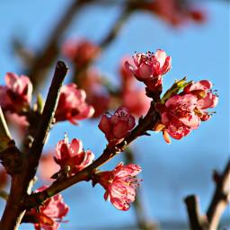 freetoedit pcflowersinthegarden flowersinthegarden spring flowers pcspringishere pcintonature