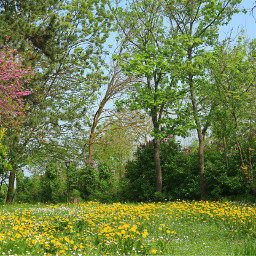 nature trees meadow grass flowers freetoedit pcspringishere