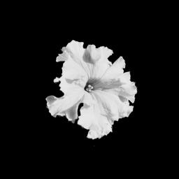 blackonwhite photographymyown