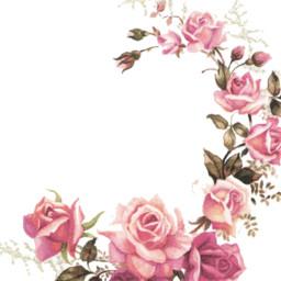 freetoedit background backgrounds flower flowerbackground