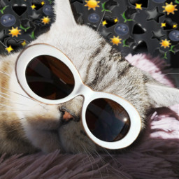 freetoedit крутойкот кот котики котэ