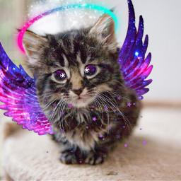 freetoedit galaxy kittenlover galaxyedit