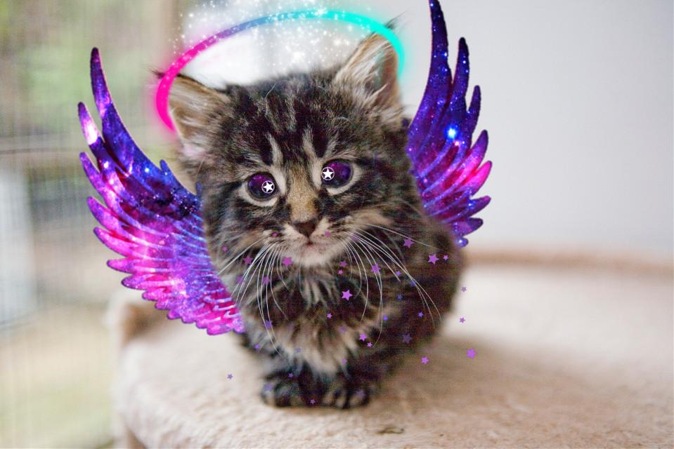 #freetoedit #galaxy #kittenlover #galaxyedit