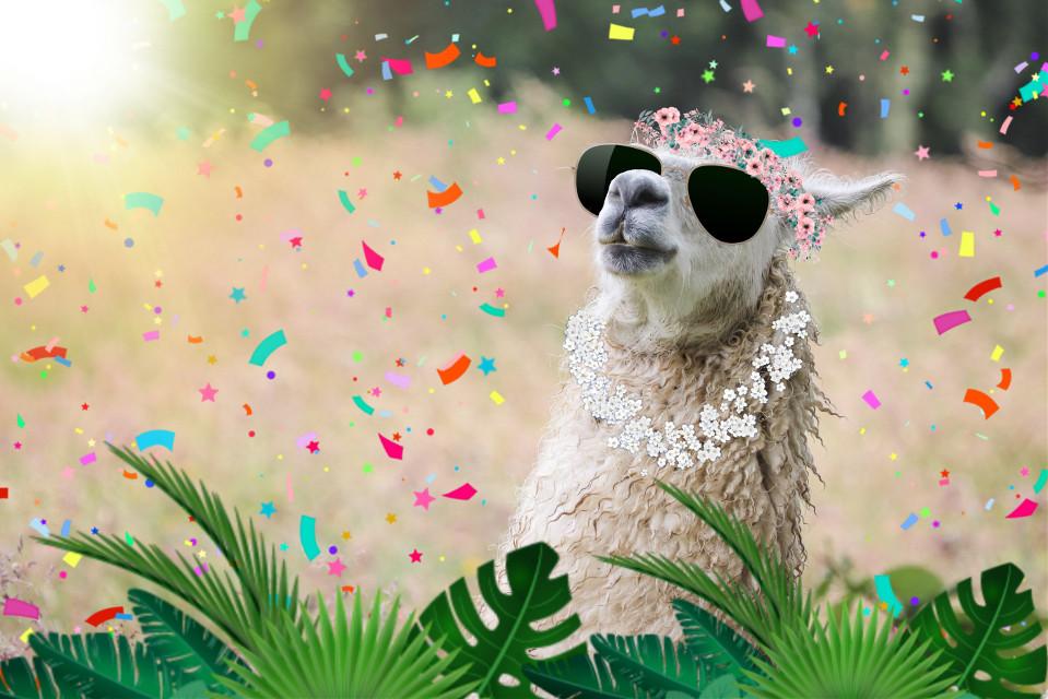 #freetoedit #llama #llamalove #llamamama #llamalover #flower #confetti #sun #sunglasses #crown #birthday #remix #edit