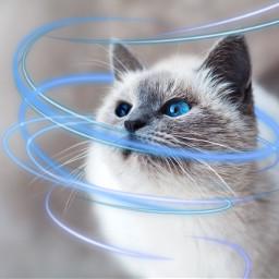 freetoedit cats
