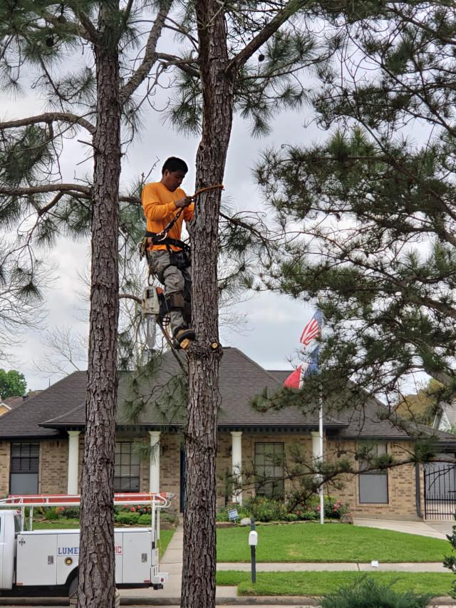 #pcworkinghard #climbing #man #people #work #rope  #freetoedit